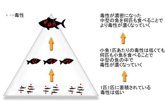魚 食物連鎖
