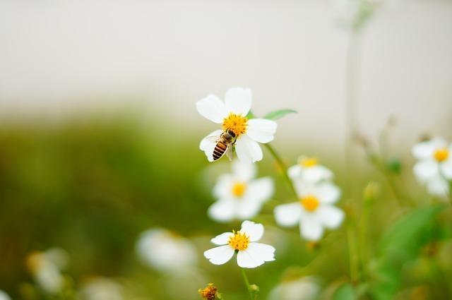 白い花と蜂