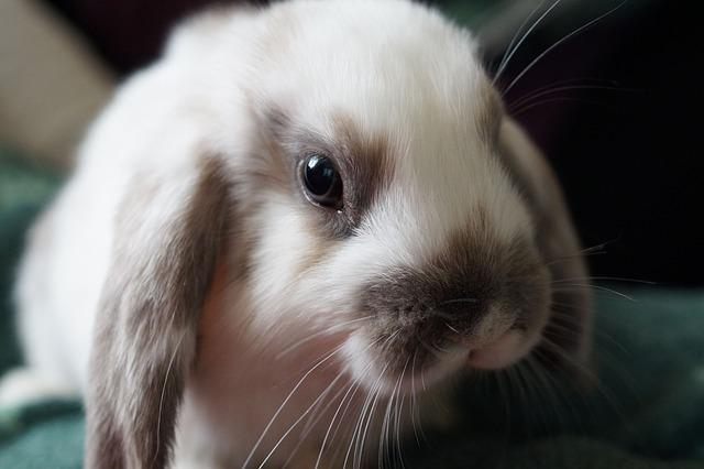 動物実験で毒性は消えない。実験の要らない製品作りを