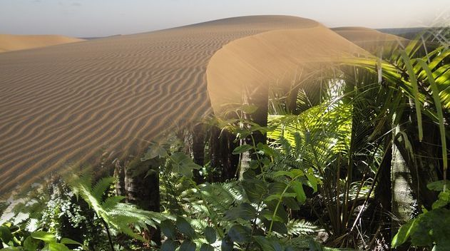 アマゾンの砂漠化