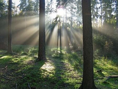 光の射す森