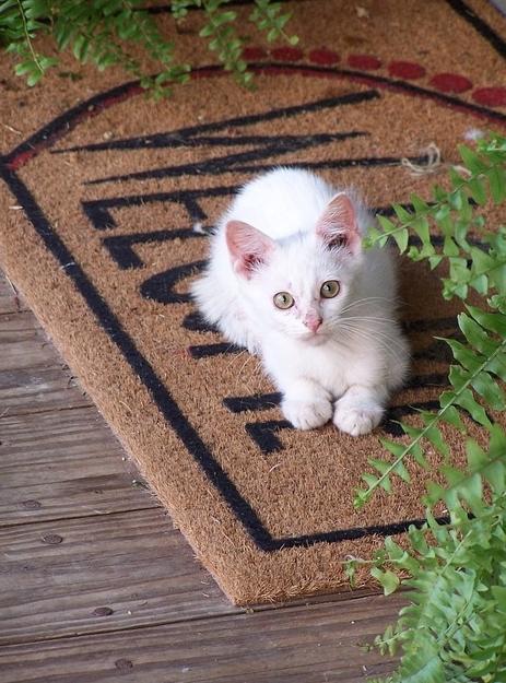 玄関マットと白いネコ