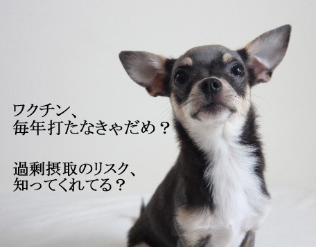 犬のワクチンの副作用リスク。本当に毎年必要?過剰接種の危険性
