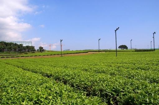 茶葉とプロペラ