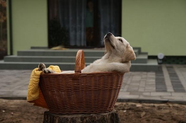 籠の中の子犬