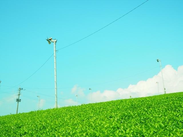 茶畑 プロペラ