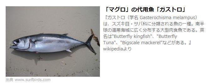 マグロの代用魚 ガストロ