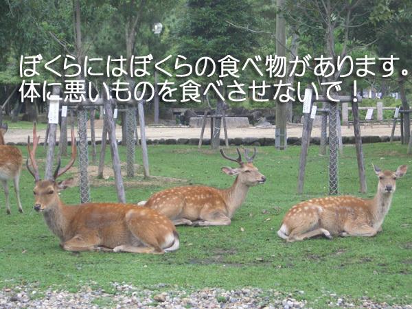 奈良の鹿に危険が迫る!マナーの悪い観光客の悪行に心が痛む