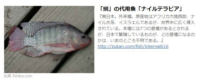 鯛の代用魚 ナイルテラピア