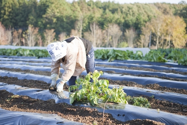 畑で働く人