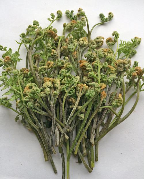 デトックス効果抜群!春の恵みの山菜・旬菜・木の芽