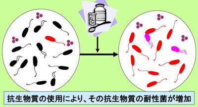 抗生物質 耐性菌