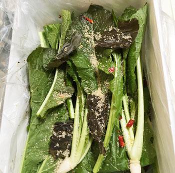 手作り 野沢菜漬け レシピ (6)
