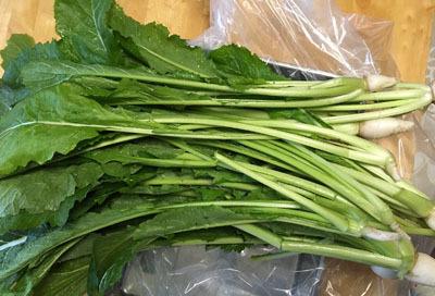 手作り 野沢菜漬け レシピ (1)